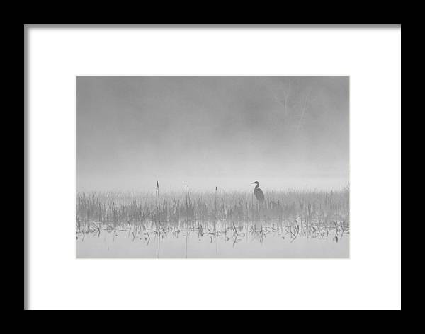 Heron Framed Print featuring the photograph Heron Waits by Peter Bowers