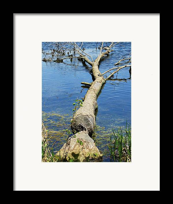 Herrick Lake Framed Print featuring the photograph Herrick Lake by Todd Sherlock