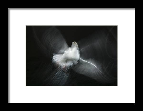 Gull Framed Print featuring the photograph Herring Gull Abstract by Andy Astbury