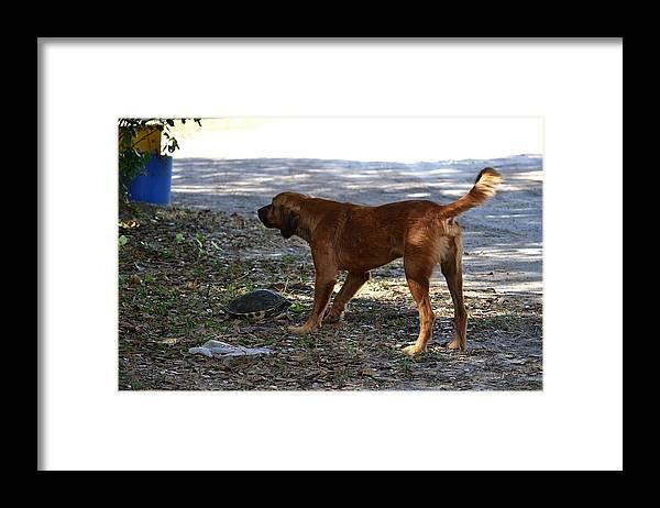 Framed Print featuring the photograph Hi Bark by Katrina Johns