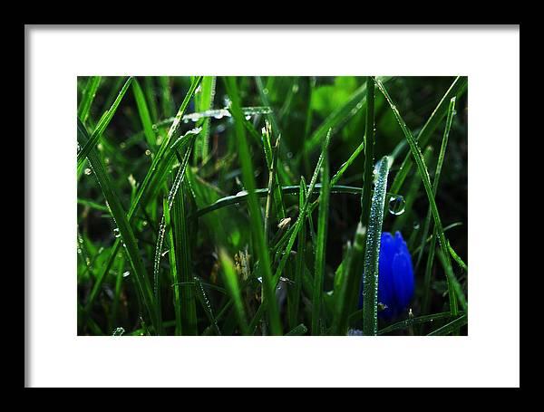 Flower Framed Print featuring the photograph Hidden Gem by Frank Blakely