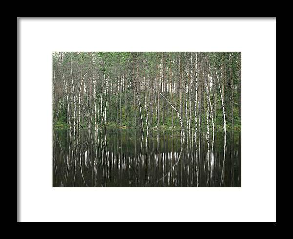 Scenic Views Framed Print featuring the photograph High Waters In A Forest Of Evergreens by Mattias Klum