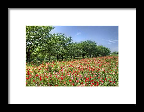 Nature Framed Print featuring the photograph Hill Where A Poppy Bloom by Tad Kanazaki