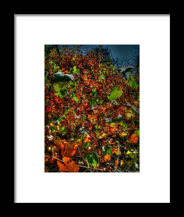 Prescott National Forest Framed Print featuring the photograph Hillside Colors by Aaron Burrows
