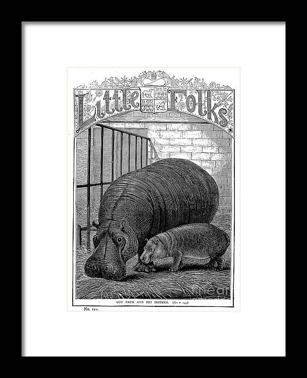 1870s Framed Print featuring the photograph Hippopotamus by Granger