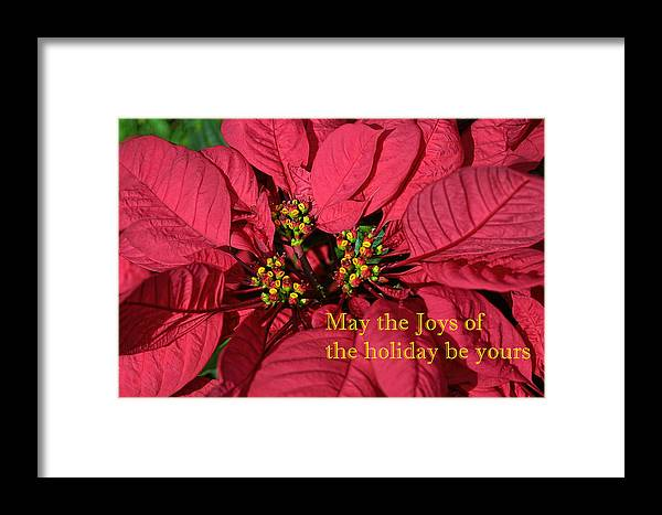 Floral Framed Print featuring the photograph Holiday Greeting Card by Linda Phelps