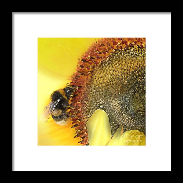 Bee Framed Print featuring the mixed media Honey Bee by Anne Weirich