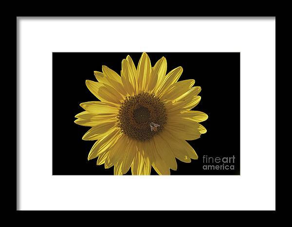 Sunflower Framed Print featuring the photograph Honey Bee by Ruth H Curtis