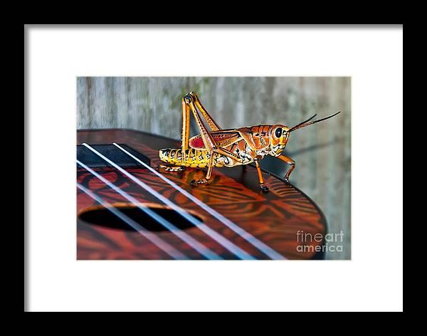 Eastern Lubber Grasshopper Framed Print featuring the photograph Hopper On A Uke by Luna Jade