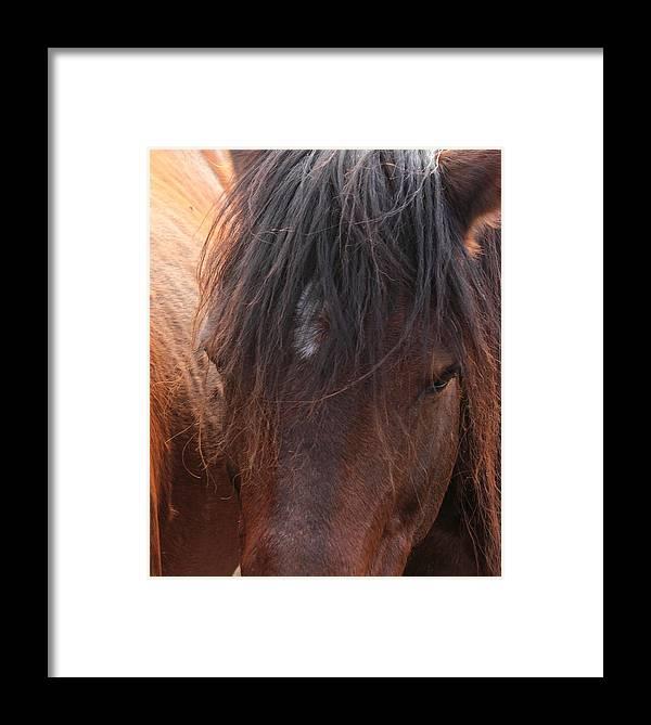 Horse Framed Print featuring the photograph Horse Hair 2 by Jim Sauchyn