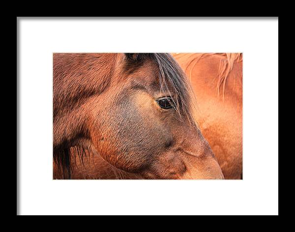 Horse Framed Print featuring the photograph Horse Head by Jim Sauchyn