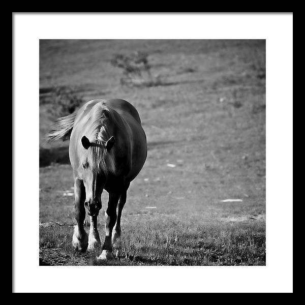Horses Framed Print featuring the photograph Horse Moves 10 by Nathan Larson