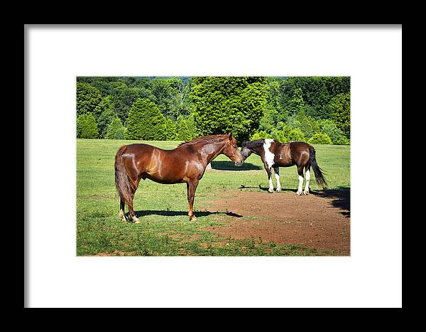 Horses Framed Print featuring the photograph Horses Of A Different Color by Paul Mashburn