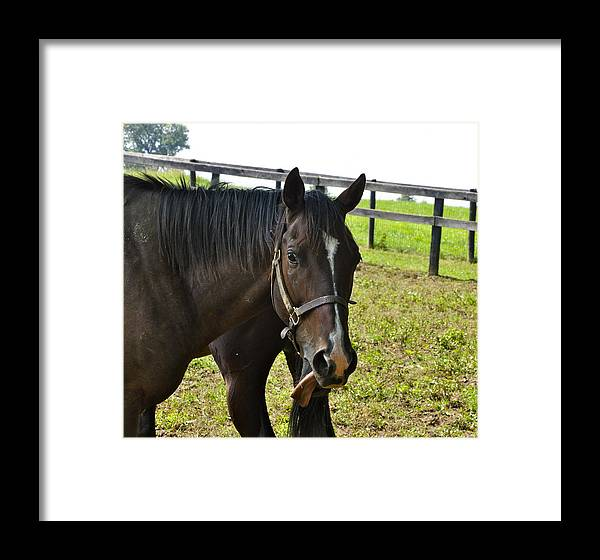 Kentucky Framed Print featuring the photograph Horsin' Around by Rosemary Legge