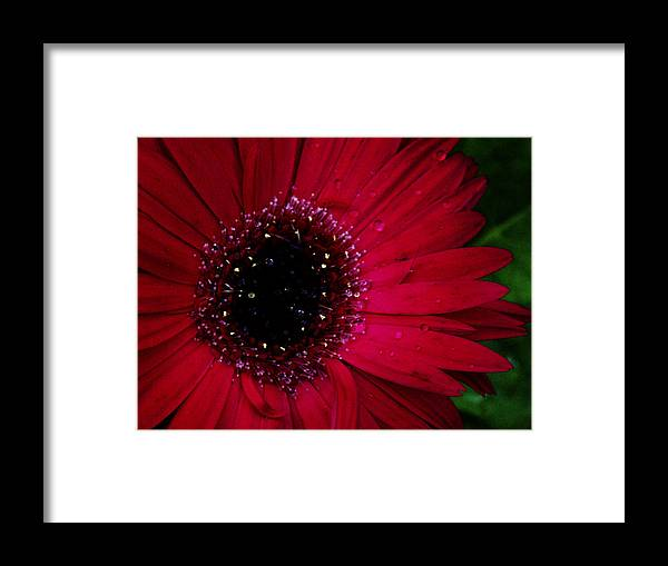 Flower Framed Print featuring the photograph Hot Pink Flame by Frank Blakely