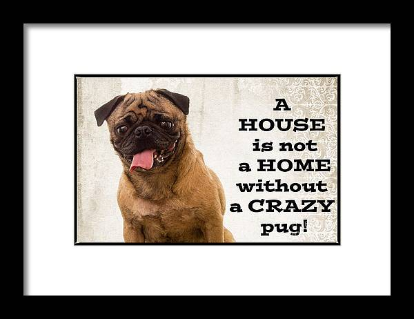 Pug Framed Print featuring the photograph House Is Not A Home Without A Crazy Pug by Edward Fielding