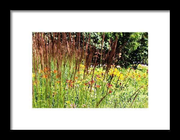 Garden Framed Print featuring the photograph How Does Your Garden Grow.. by Margaret Hamilton