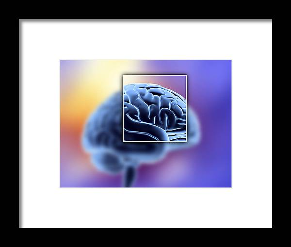 Brain Framed Print featuring the photograph Human Brain by Pasieka