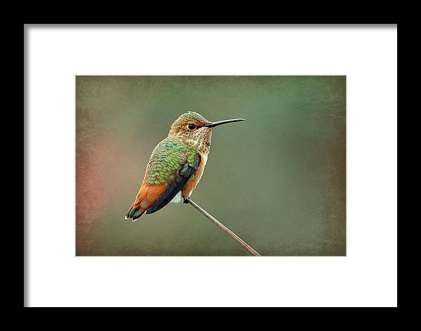 Hummingbird Framed Print featuring the photograph Hummer At The Tiptop by Fraida Gutovich