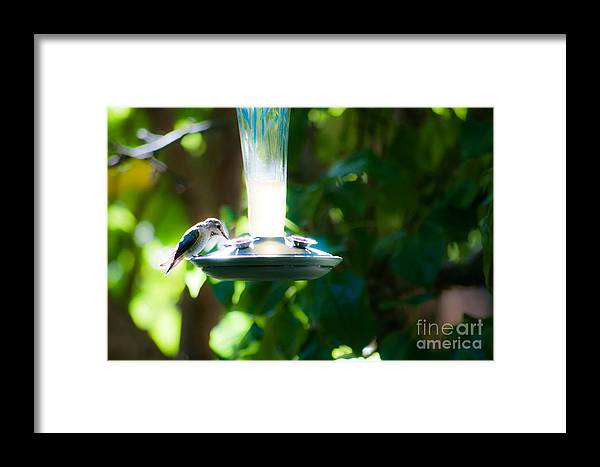 Birds Framed Print featuring the photograph Humming Bar by Steven Van Gucht