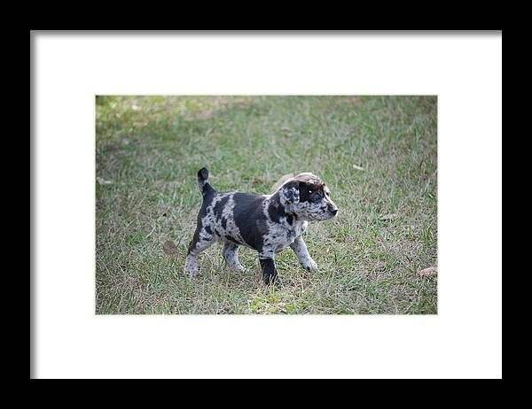 Framed Print featuring the photograph I Am Cute Puppy Too by Katrina Johns