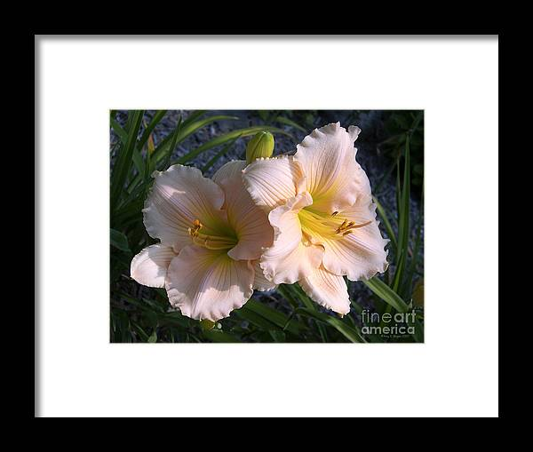 Pink Framed Print featuring the photograph I Love Being Close To You by Amy Reges