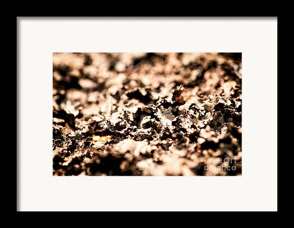 Lychens Framed Print featuring the photograph I Shall Imagine Life by Venura Herath