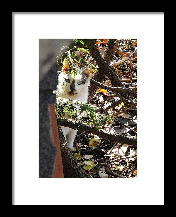 Feral Framed Print featuring the photograph I Trust You by Jane Alexander