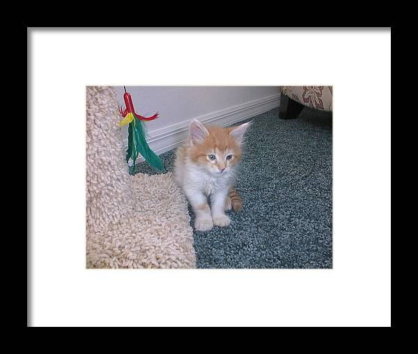 Framed Print featuring the photograph I Want My Mommy by John Black