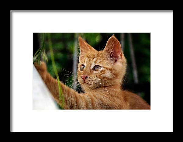 Nature Framed Print featuring the photograph I Will Catch You by Zoran Buletic