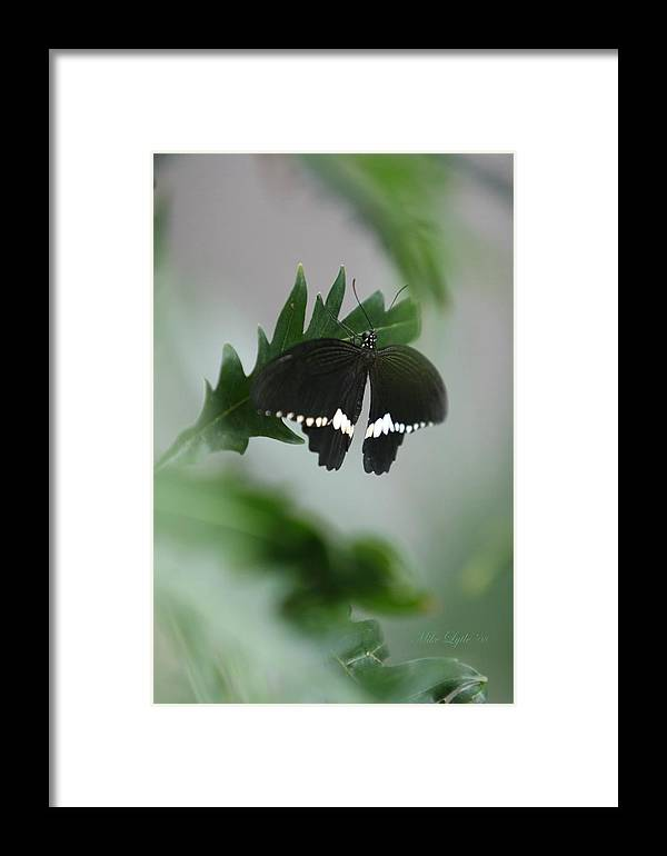 Butterfly Framed Print featuring the photograph I'm Black And White I by Mike Lytle