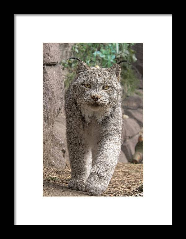Animals Framed Print featuring the photograph I'm Here by Cheri McEachin