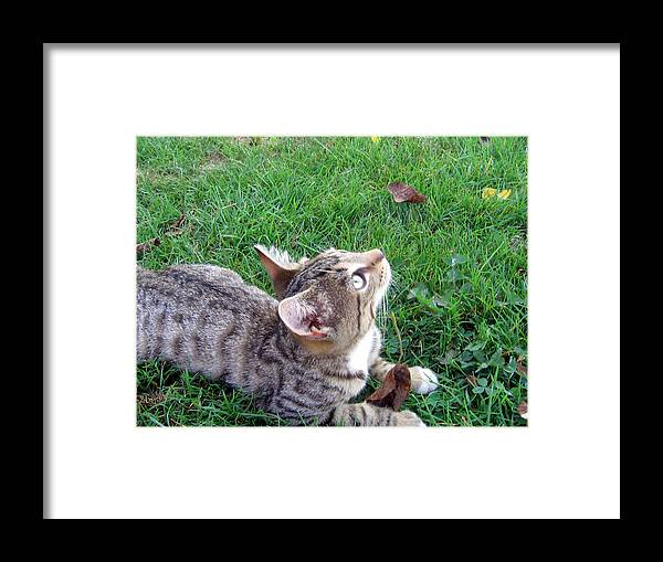 Cat Framed Print featuring the photograph In Awe by Marlene Robbins