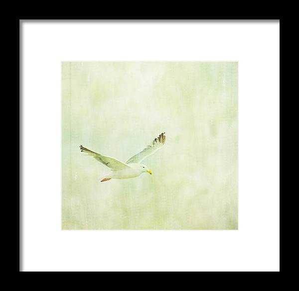 Seagull Framed Print featuring the photograph In Flight by Rebecca Cozart