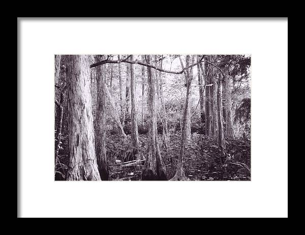 In-fared Framed Print featuring the photograph Infrared Swamps by Adrienne Lahr
