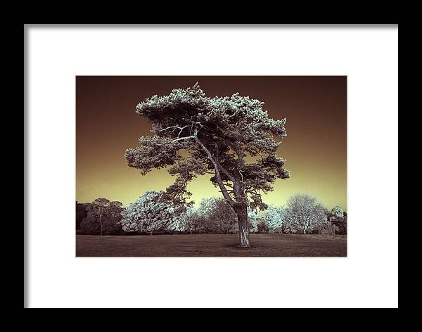 Tree Framed Print featuring the photograph Infrared Tree by Andy Linden