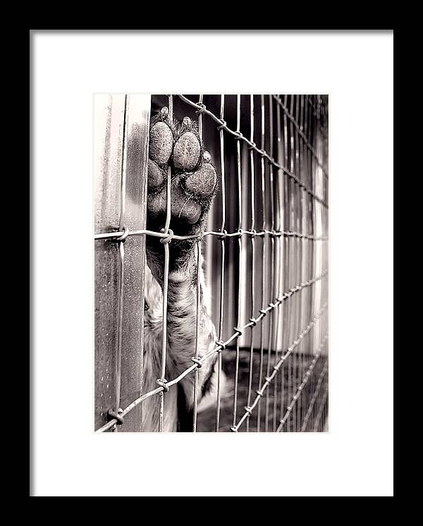 Dog Framed Print featuring the photograph Inhumane Society by Tammy McKinley