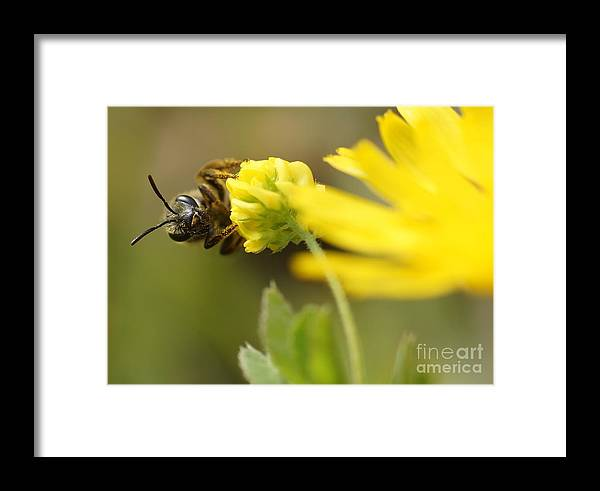 Insect Framed Print featuring the digital art Insect by Bencso Tomas