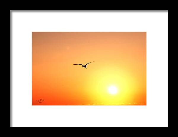 Sun Framed Print featuring the photograph Into the Sun by Christine Stonebridge