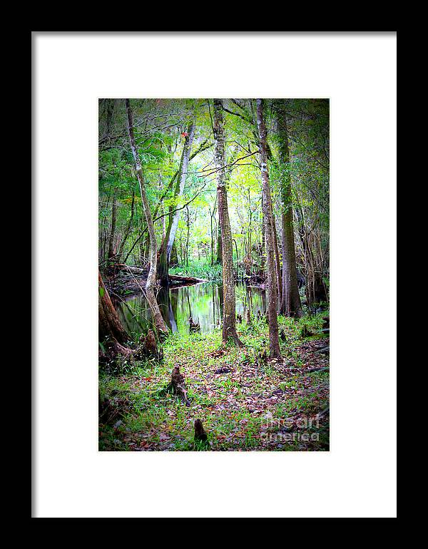 Swamp Framed Print featuring the photograph Into The Swamp by Carol Groenen