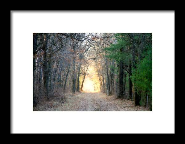 Woods Framed Print featuring the photograph Into The Woods by Mark J Seefeldt