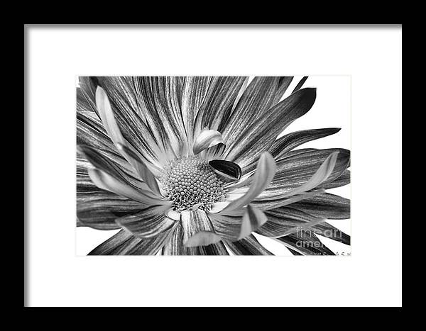 Flower Framed Print featuring the photograph Inviting by Susan Smith