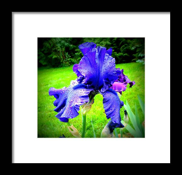 Flowers Framed Print featuring the photograph Iris by Lisa Rose Musselwhite