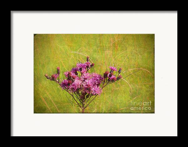 Purple Framed Print featuring the photograph Ironweed In Autumn by Judi Bagwell