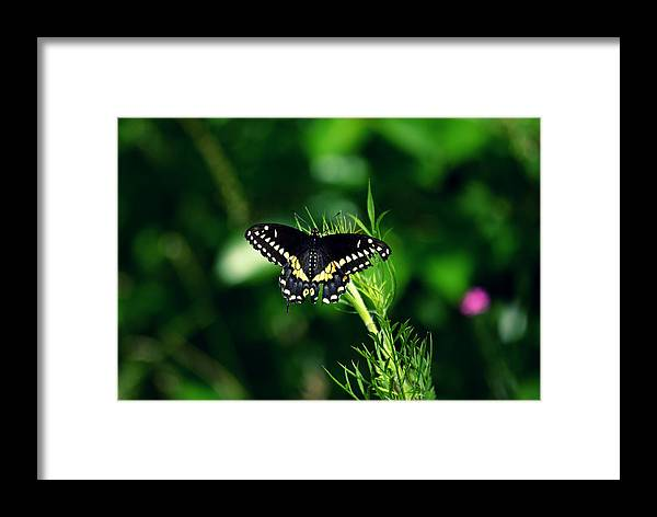 Butterfly Nature Green Photography  Framed Print featuring the photograph It's Been A Rough Day by Robin Dickinson