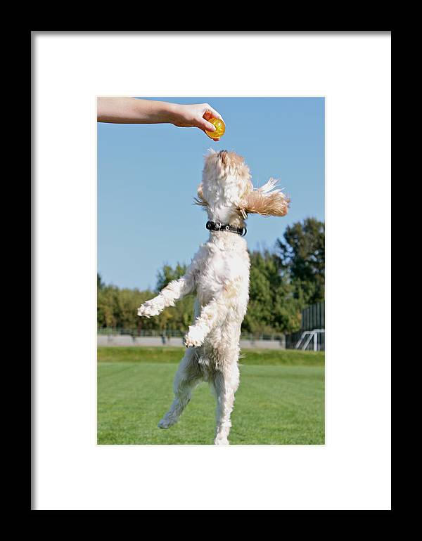 Dog Framed Print featuring the photograph It's Mine by Julie Woods