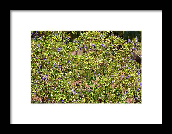 Jaranda Framed Print featuring the photograph Jaranda by Art Kleisen