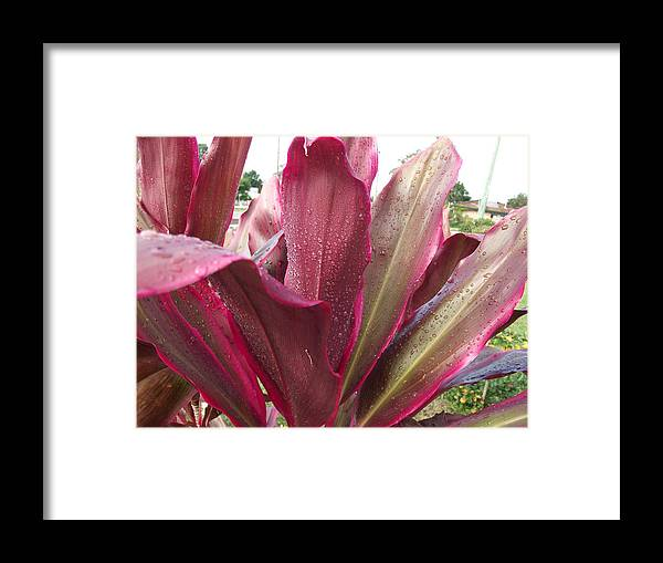 Leaf Framed Print featuring the photograph Jeweld Tri-color by Rani De Leeuw