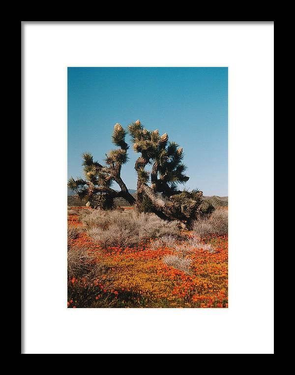 Joshue Tree Framed Print featuring the photograph Joshuaa Tree In The Poppies by Mel White Photo