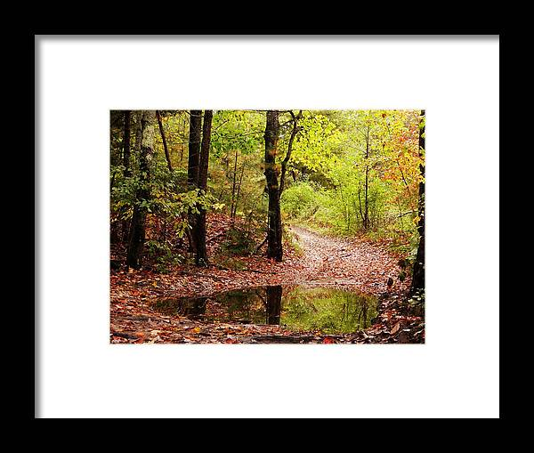 Josie's Brook Framed Print featuring the photograph Josie's Brook Trail by Tim Canwell